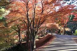 三重県津市の自然 紅葉