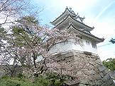 2018年3月24日 三重県津市の桜開花情報