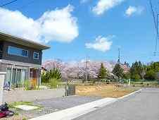 桜が良く見えます